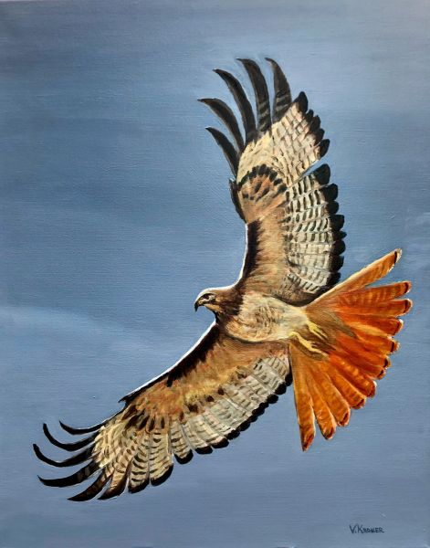 Red-Tail Hawk - View from Heaven