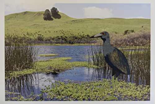 Blue Heron in Briones