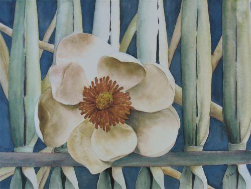 Biege Magnolia