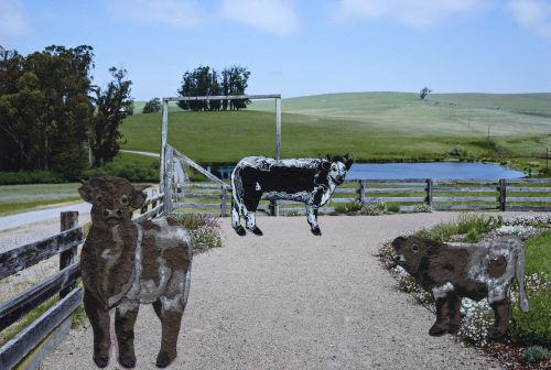 Brazil Ranch with Cows