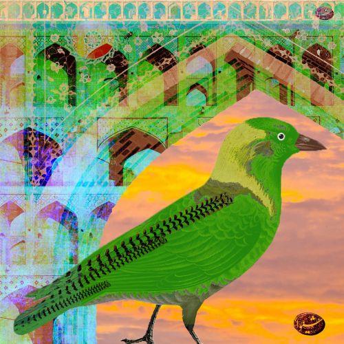 the 30 bird project II