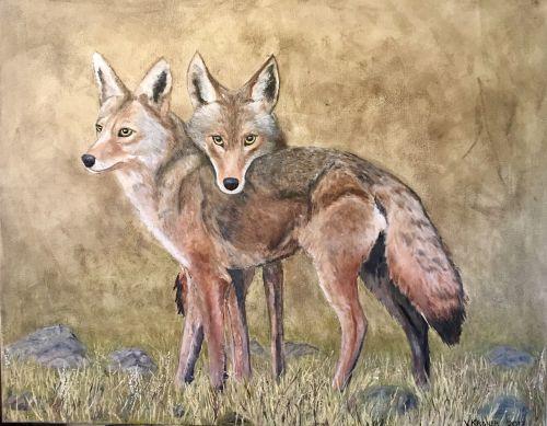 Coyote Comfort