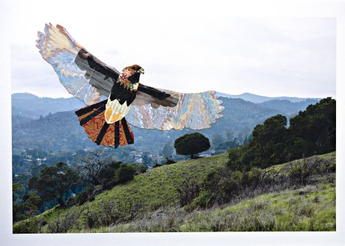 Red-tailed Hawk Over San Anselmo