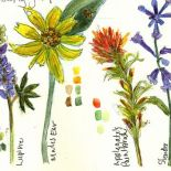 Wildflowers of Marin in your Watercolor Nature Journal