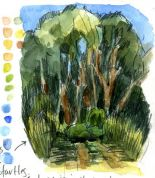 The Gesture of Trees in your Watercolor Nature Journal